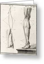 Leg Nerve, 18th Century Illustration Greeting Card