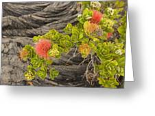 Lehua Flower Greeting Card
