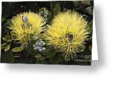 Lehua Mamo Blossom Greeting Card