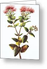 Lehua Ohia Art Greeting Card