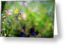 Lemon Butterfly In Summer Meadow  Greeting Card