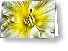 Lemon Cream Daylilly Greeting Card