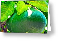 Lemon Or Lime Greeting Card