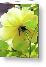 Lemon Yellow Rose Greeting Card
