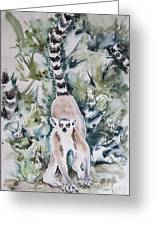 Lemur Catta Greeting Card