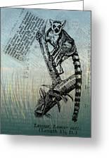 Lemur Catta Greeting Card