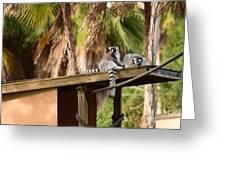 Lemur Couple Greeting Card