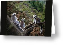 Lemur Family Greeting Card