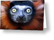 Lemur Glare Greeting Card