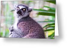 Lemur's Gaze Greeting Card