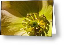 Lenten Rose Study Greeting Card