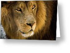 Leo The Lion Greeting Card