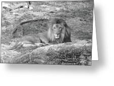 Leo The Lion..... Greeting Card