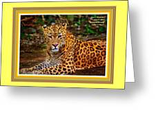 Leopard Beauty Catus 1 No. 1 L A With Decorative Ornate Printed Frame Greeting Card