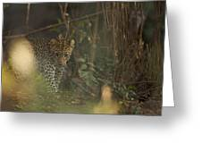 Leopard Comes Out Of The Bush Greeting Card