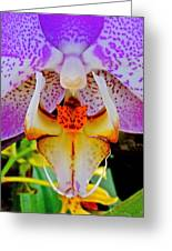 Leopard Dragon Orchid Greeting Card