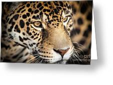 Leopard Face Greeting Card by John Wadleigh