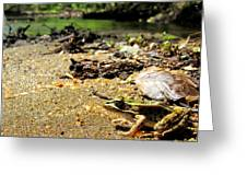 Leopard Frog Landing Greeting Card