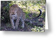 Leopard Front Greeting Card