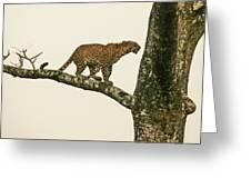 Leopard In A Sal Tree Greeting Card