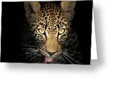 Leopard In The Dark Greeting Card