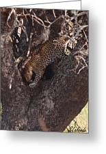 Leopard In Tree Greeting Card