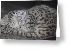 Leopard Kitten Greeting Card