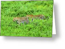 Leopard On The Move Greeting Card