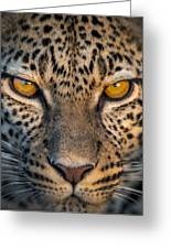 Leopard Panthera Pardus, Ndutu Greeting Card