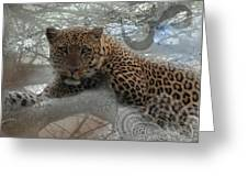 Leopard Tree Hugger Photo Collage Greeting Card
