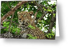 Leopard With Piercing Eyes Greeting Card