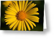 Leopard's Bane 10 Greeting Card