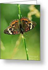 Lepidoptera Greeting Card