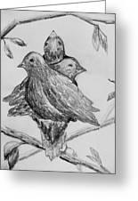 Les Trois Oiseaux Greeting Card