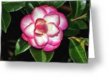 Leslie Ann - Sasanqua Camellia 007 Greeting Card