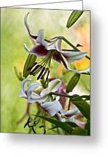 Leslie Woodriffe Lily Greeting Card