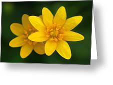 Lesser Celandine Greeting Card