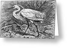 Lesser Egret Greeting Card