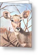 Lesser Kudu Greeting Card