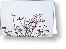 Lesser Yellownape Woodpecker Greeting Card
