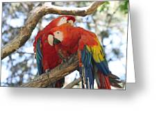 Let Me Get It - Scarlet Macaws Greeting Card
