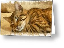 Let Sleeping Cats Lie Greeting Card