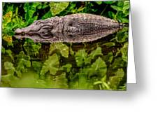 Let Sleeping Gators Lie Greeting Card