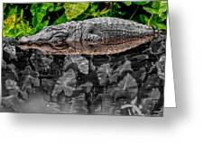 Let Sleeping Gators Lie - Mod Greeting Card