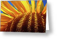 Let The Light Shine In Greeting Card