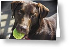 Lets Play Ball Greeting Card
