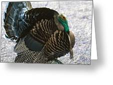 Lets Talk Turkey  Greeting Card