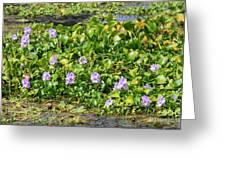 Lettuce Lake Flowers Greeting Card