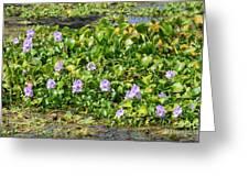 Lettuce Lake Flowers Greeting Card