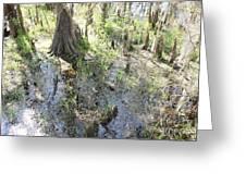 Lettuce Lake Swampland Greeting Card